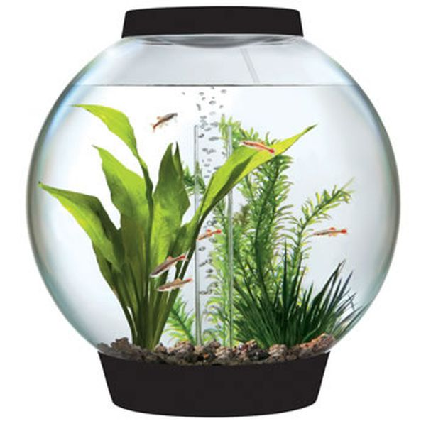 BiOrbs Tabletop Aquarium