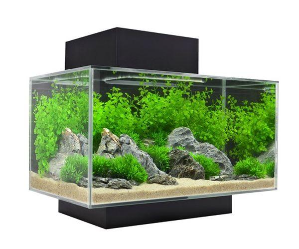 5 Amazing Tabletop Aquariums