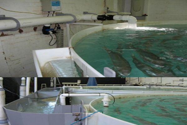Aquaculture - yoovee ultraviolet water sterlisation