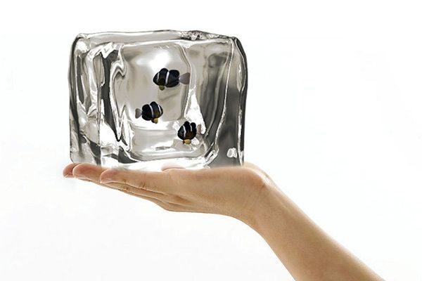 Ice Cube fish tank by Arthur Xian