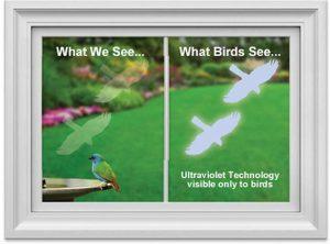 WindowAlert decals protect Wild Birds From Striking Windows_1