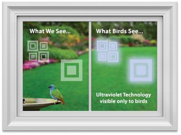 WindowAlert decals protect Wild Birds From Striking Windows_2