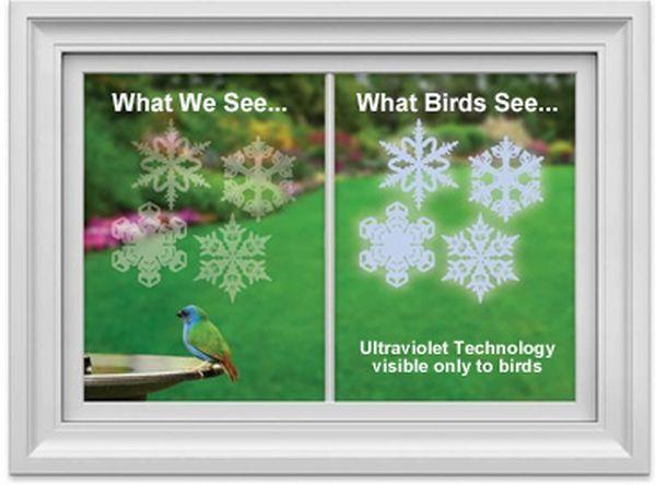 WindowAlert decals protect Wild Birds From Striking Windows_3