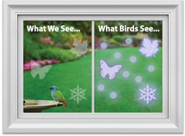 WindowAlert decals protect Wild Birds From Striking Windows_4