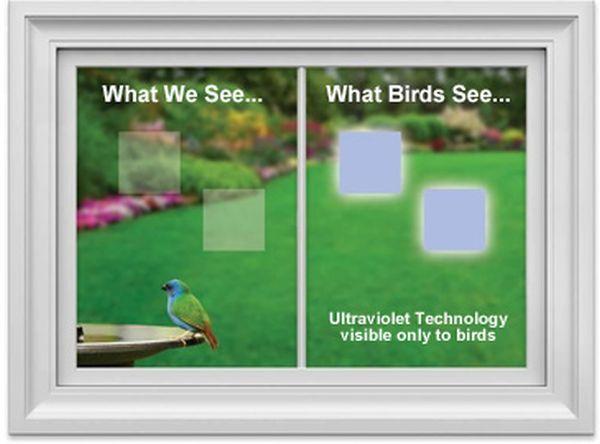 WindowAlert decals protect Wild Birds From Striking Windows_5