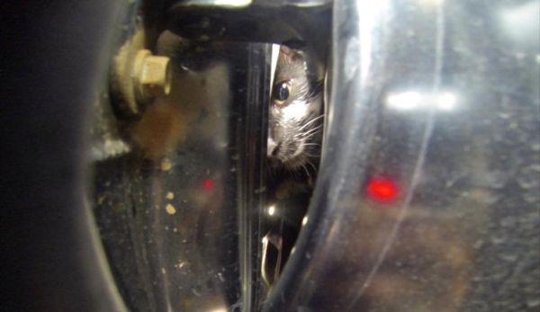Live cat stuck inside her rental car_2