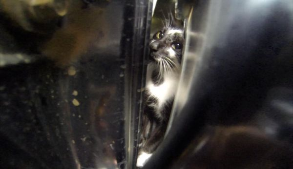 Live cat stuck inside her rental car_3