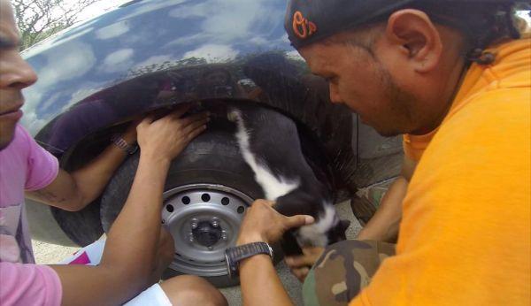 Live cat stuck inside her rental car_9