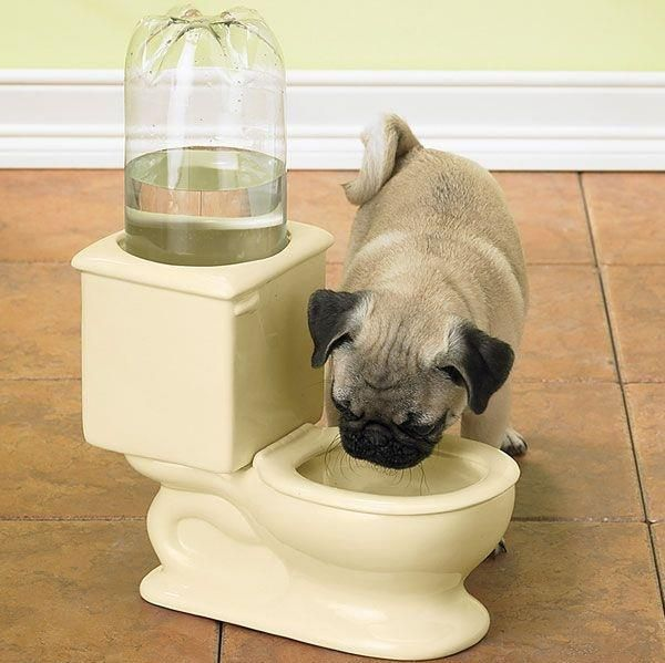 CSB Dog Toilet Bowl keeps your pet hydrated_1