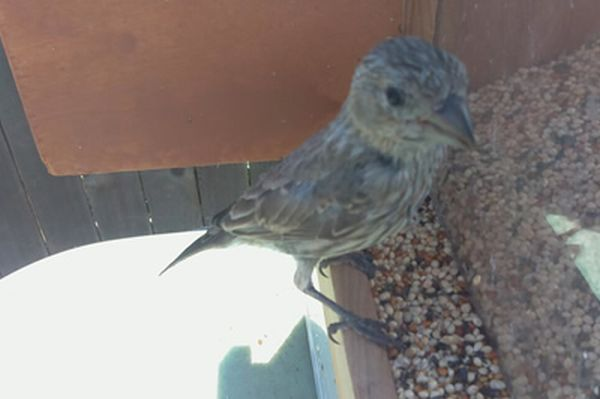 Feeder Tweeter snaps photos of birds and tweets them_1