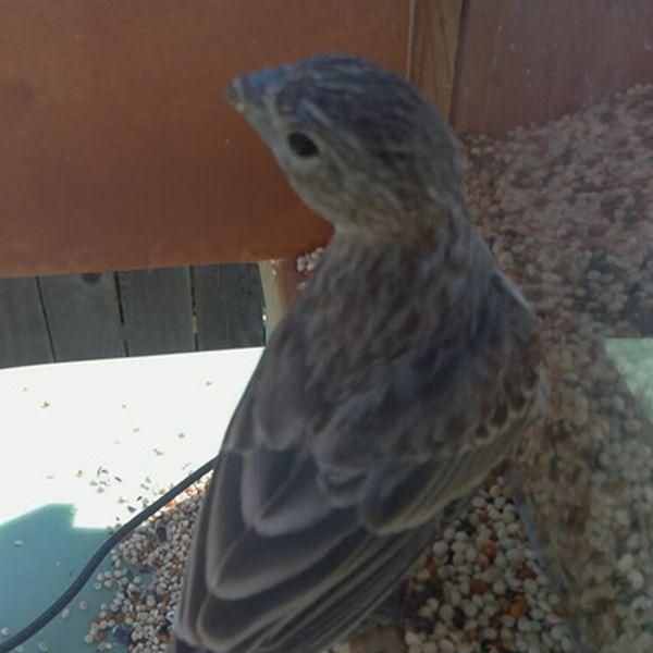 Feeder Tweeter snaps photos of birds and tweets them_2