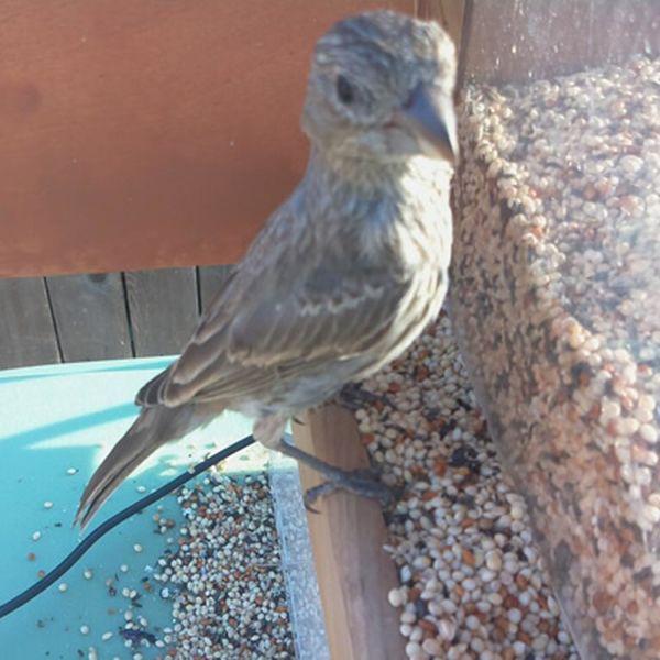 Feeder Tweeter snaps photos of birds and tweets them_3