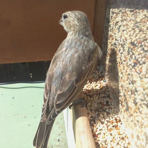 Feeder Tweeter snaps photos of birds and tweets them_4