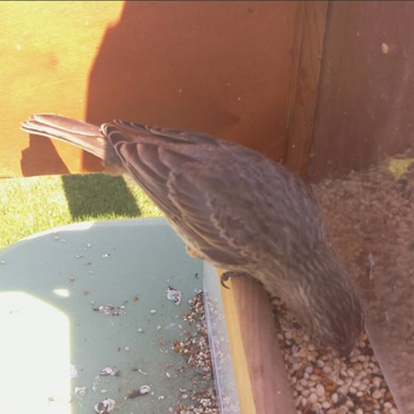 Feeder Tweeter snaps photos of birds and tweets them_6