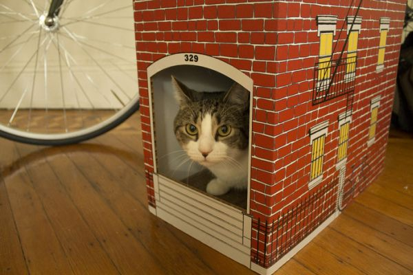 Brooklyn architecture inspired Cat Townhouse_2