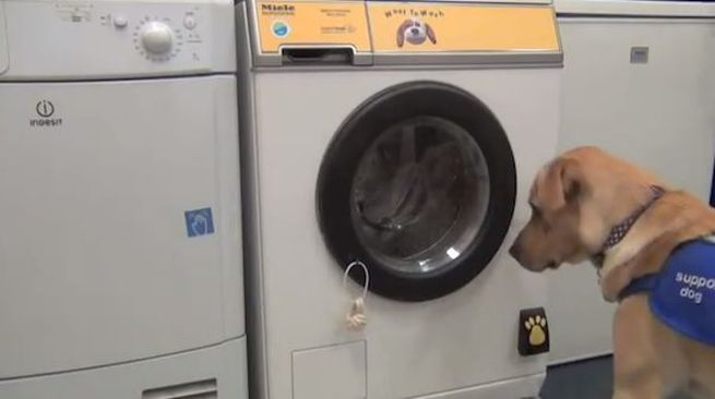JTM washing machine can be operated by dogs