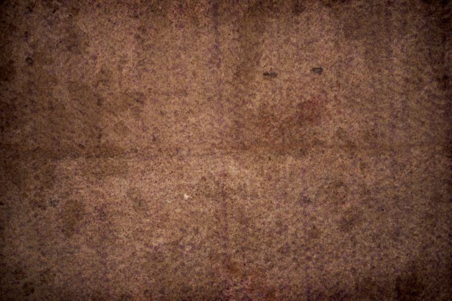 How to remove mold from your carpet_1
