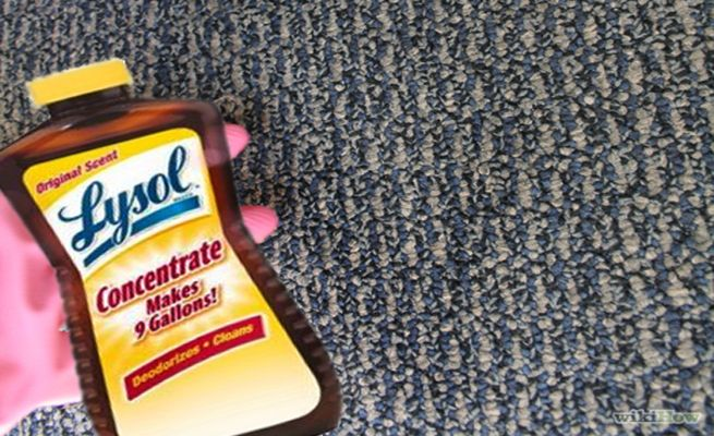 How to remove mold from your carpet_4