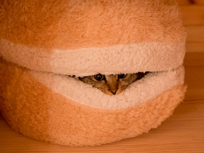 Cat Burger Pillow_4
