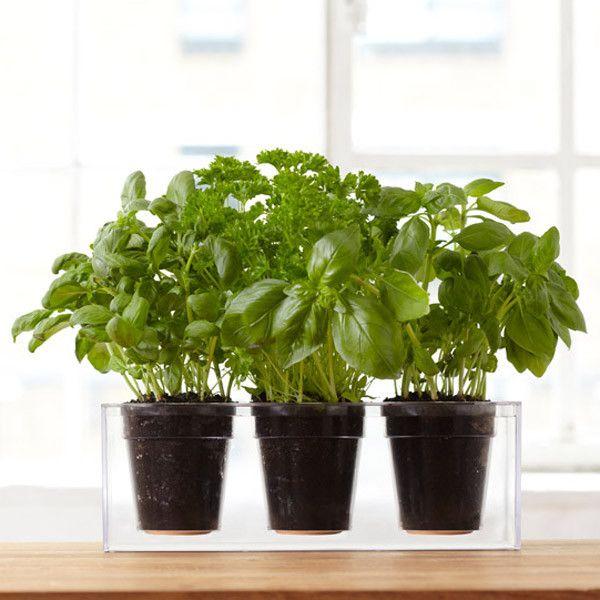 Boskke Cube self watering planter_1