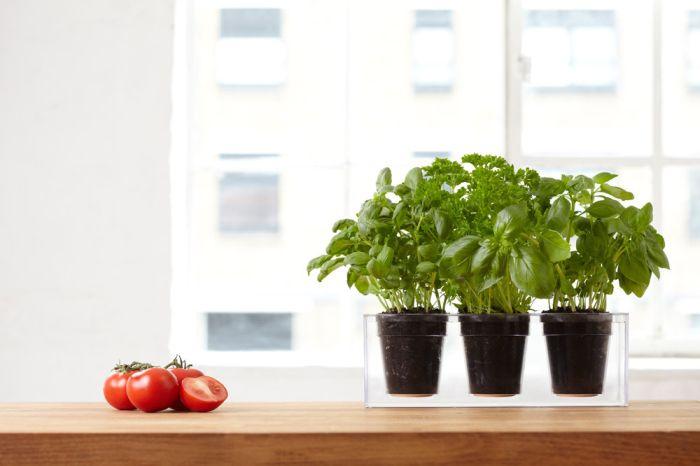 Boskke Cube self watering planter_4
