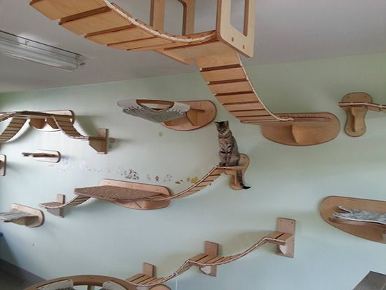 Wall-Ceiling Arrangements for Cats from Goldtatze