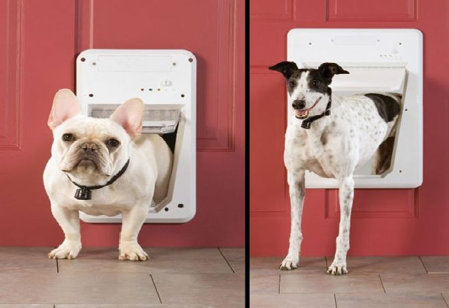 Petsafes Smart Dog Door Opens Automatically For Your Dog