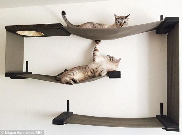Cat_Designer_Furniture