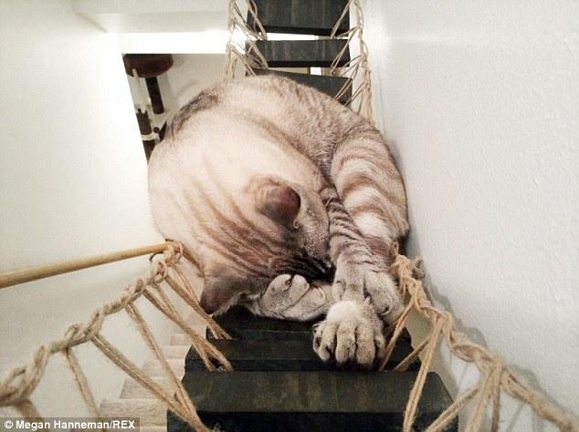 Cat_Designer_Furniture_1