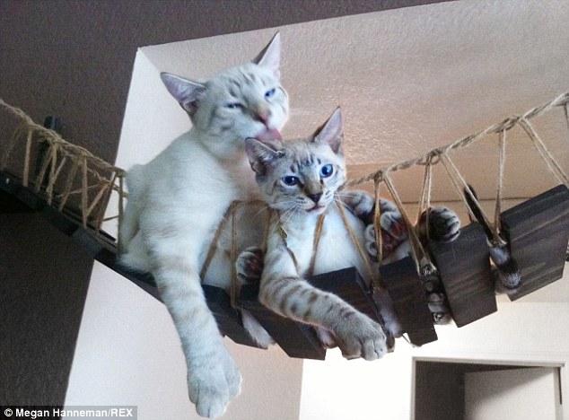 Cat_Designer_Furniture_2