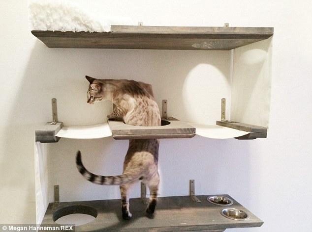 Cat_Designer_Furniture_3