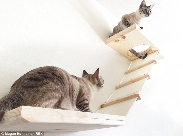 Cat_Designer_Furniture_6