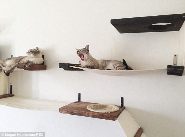 Cat_Designer_Furniture_7