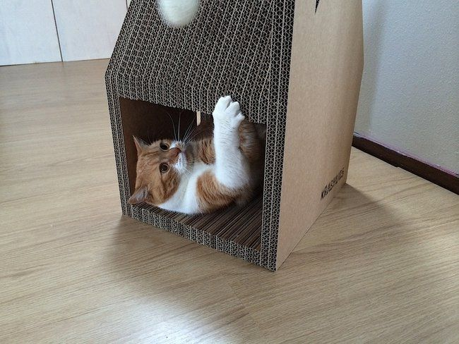 Krabhuis, the cardboard house for cats_5