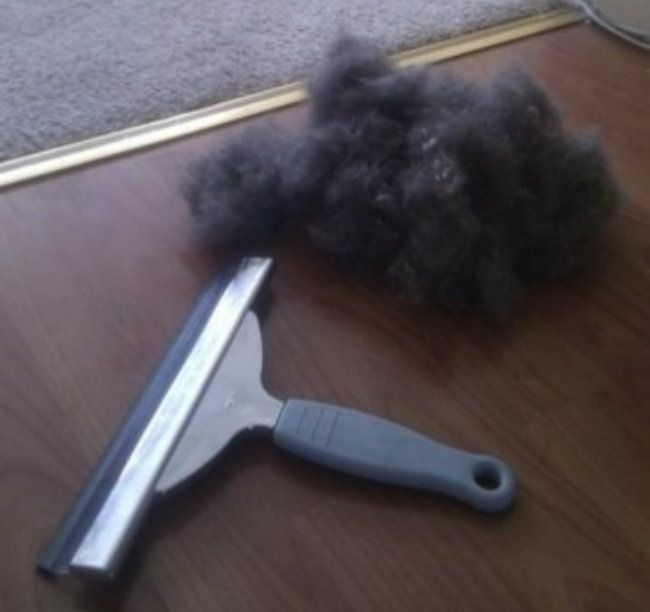 Get rid of the pet hair_8