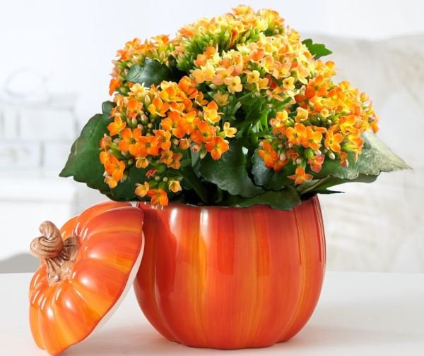 Thanksgiving Decoration Ideas with Pumpkins_5