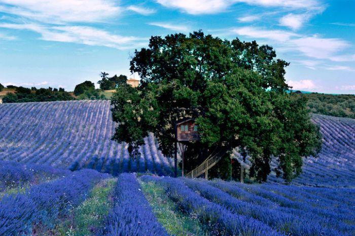 Suite Bleue Treehouse in Arlena di Castro, Italy-1