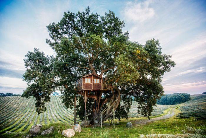 Suite Bleue Treehouse in Arlena di Castro, Italy-2