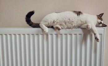 cat on top of radiator