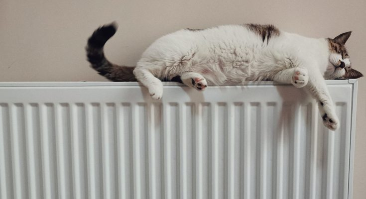 cat on top of radiator