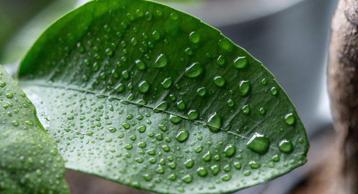 humidity on leaf