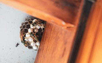 wasp nest on window