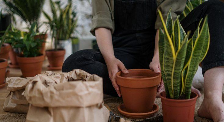 potting in garden