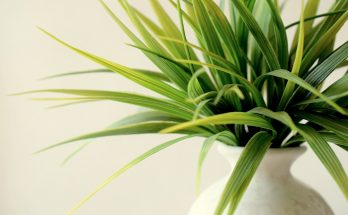 indoor plant in white vase